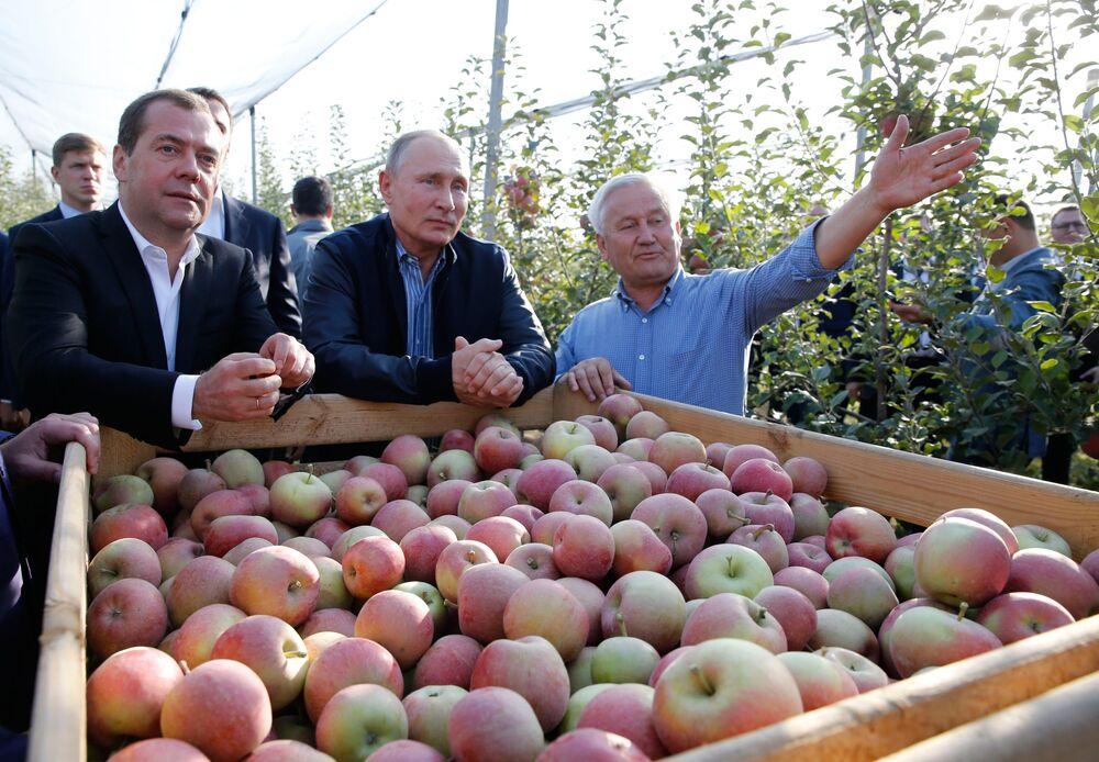 Ruský prezident Vladimir Putin a ruský předseda vlády Dmitrij Medveděv během návštěvy jablečných sadů v jednom ze zemědělských podniků ve Stavropolském kraji.