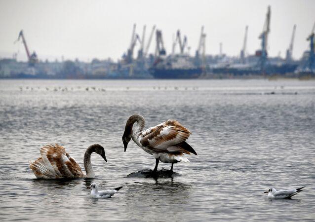 Pohled na Kerčský přístav