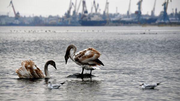 Pohled na Kerčský přístav - Sputnik Česká republika