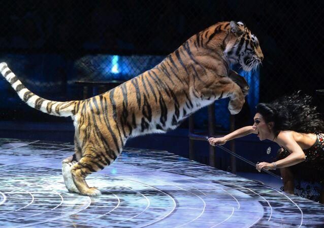 Světový festival cirkusového umění Idol