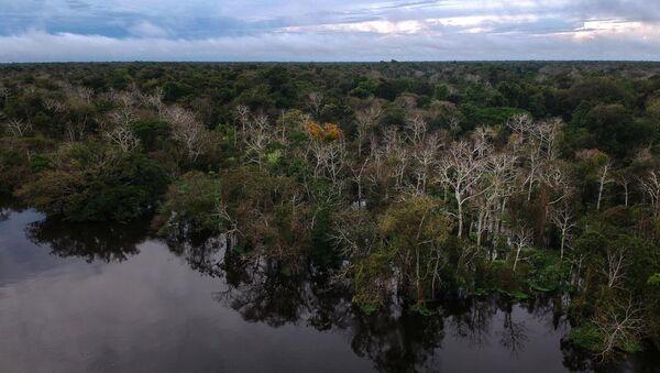 Pohled na les a řeku Jaraua v Brazílii - Sputnik Česká republika