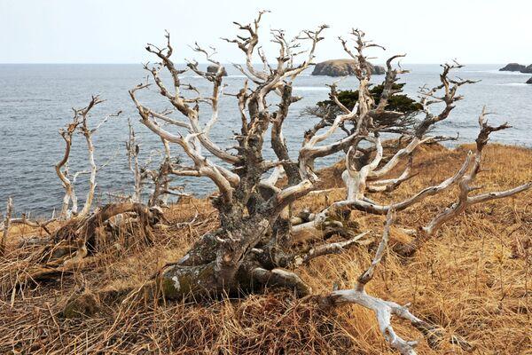 Jablko sváru. Ruský ostrov Šikotan na hranici s Japonskem - Sputnik Česká republika
