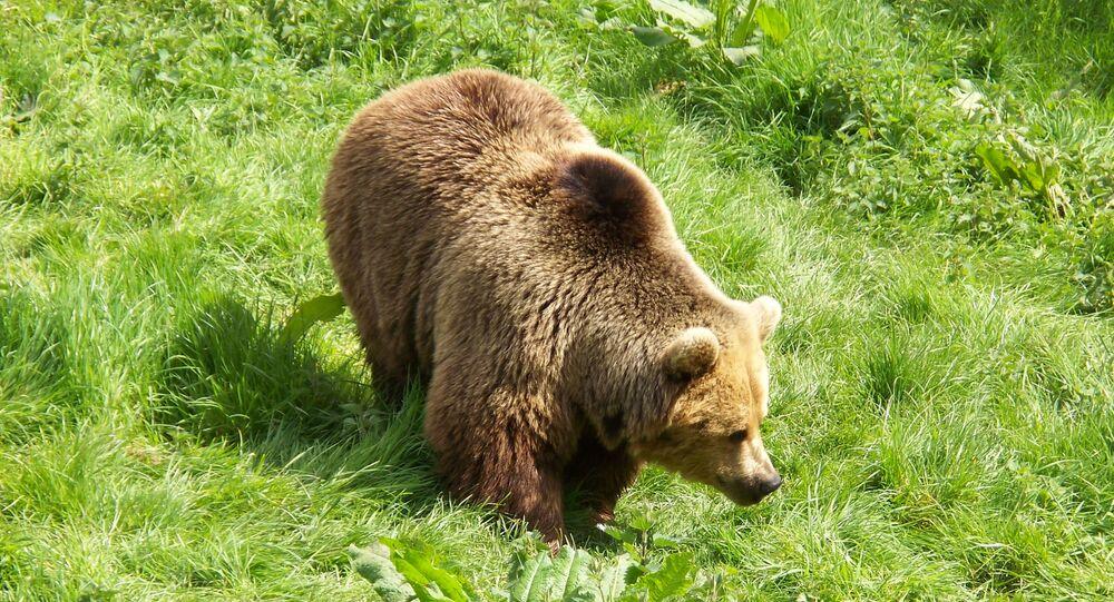 Medvěd. Ilustrační foto