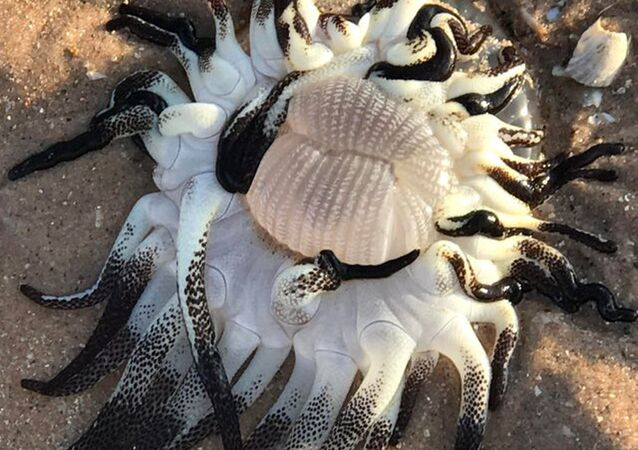 Záhadný tvor v Západní Austrálii