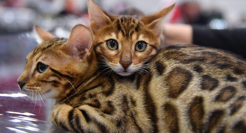 Kočky. Illustrační foto