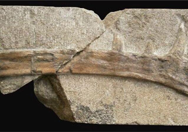 Zkamenělé pozůstatky Klobiodon rochei