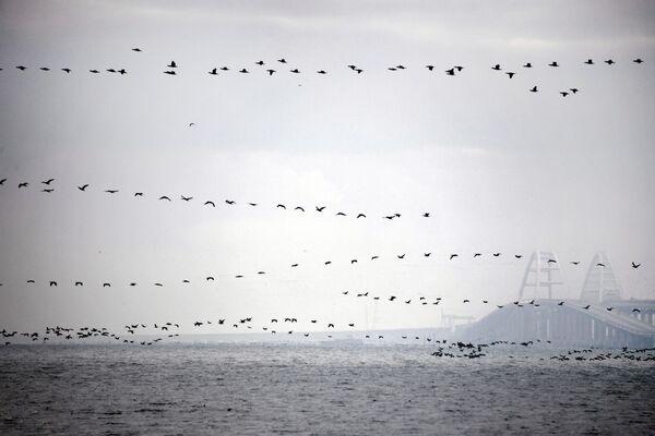 Ptáci nad Kerčským průlivem - Sputnik Česká republika