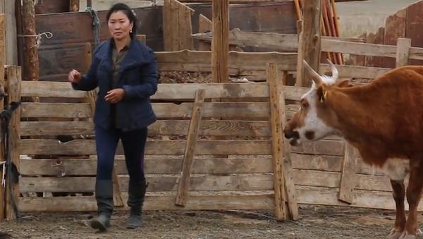 SMSky pomáhají mongolským pastevcům - Sputnik Česká republika