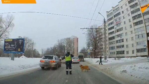 Fenka utekla z domu, když běžela na rande. Dojemný příběh psí lásky - Sputnik Česká republika