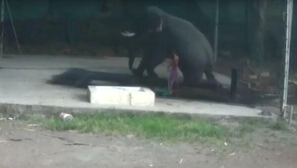 Když člověk není králem přírody. V Indii se slon pomstil chovateli , který ho udeřil (VIDEO) - Sputnik Česká republika