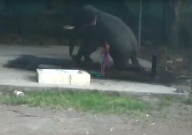 Když člověk není králem přírody. V Indii se slon pomstil chovateli , který ho udeřil (VIDEO)