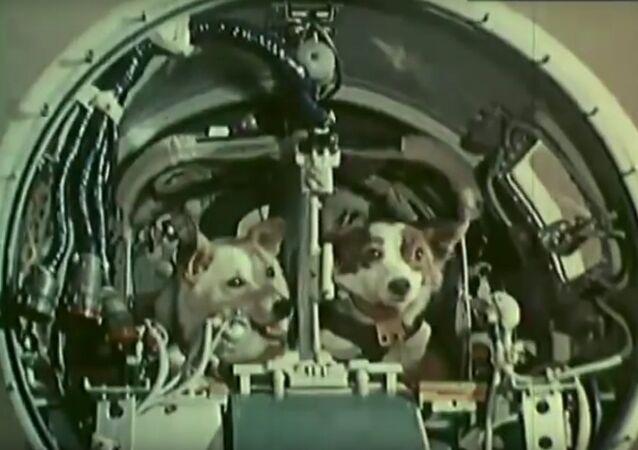 Archiv: Bělka a Strelka ve vesmíru