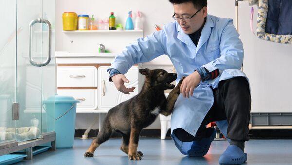Klonovaný čínský pes - Sputnik Česká republika