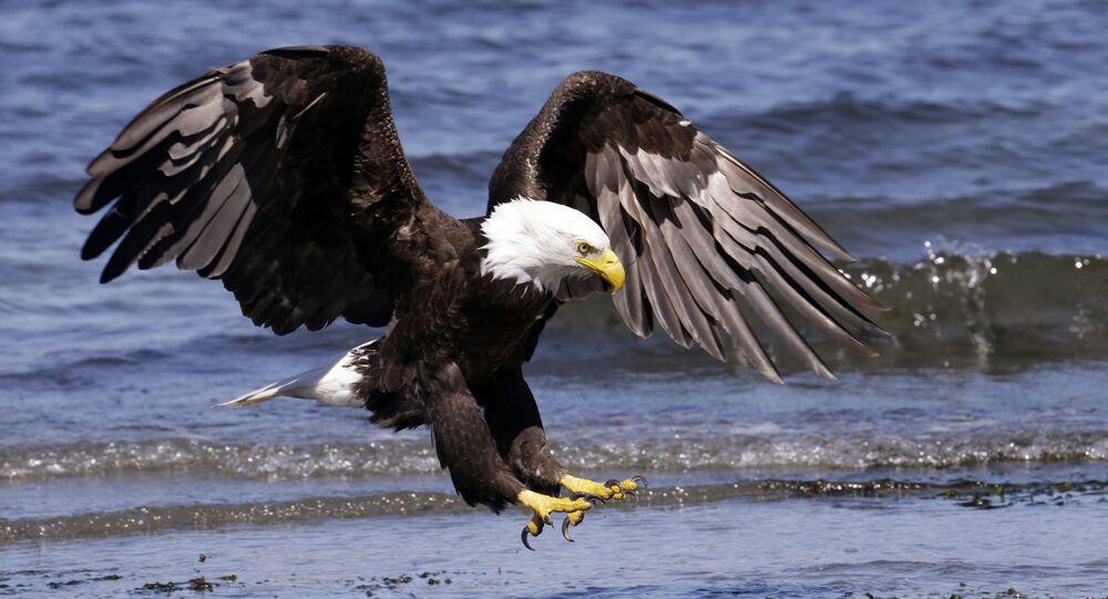 Lepší, když jdu pěšky: Vzácný obří pták v Rusku zastavil provoz
