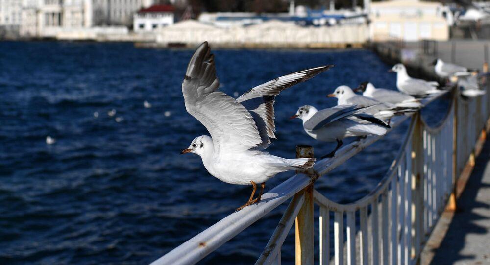 Racci v Sevastopolu