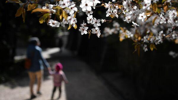 Цветущее дерево в Воронцовском парке в Алупке - Sputnik Česká republika