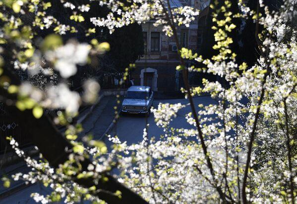 V plném rozkvětu: Jaro na Krymu láká bohatstvím barev - Sputnik Česká republika