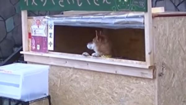 Pracovitý pes. V Japonsku prodává pes brambory (VIDEO) - Sputnik Česká republika