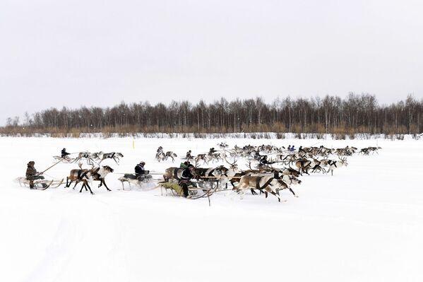 Takové svátky zažijete pouze zde: Den chovatele sobů na Dálném severu - Sputnik Česká republika