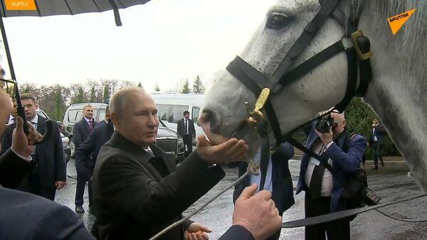 Živé dárky pro prezidenta: Putinova sbírka mláďat se po dárku kyrgyzského protějška rozšířila - Sputnik Česká republika