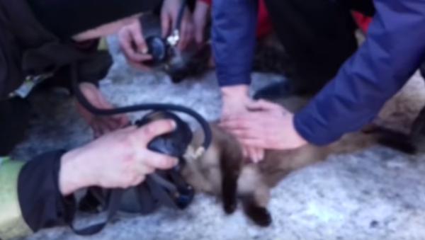 V Magadanu hasiči vzkřísili kočky zachráněné z hořícího bytu (VIDEO) - Sputnik Česká republika