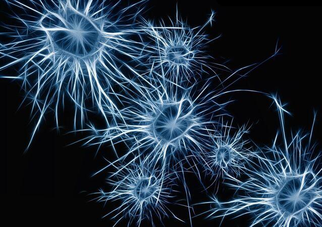 Neurony mozku. Ilustrační foto