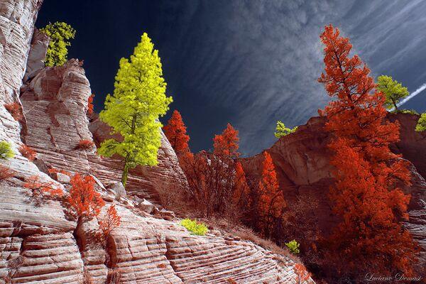 Fotografie ze série Utah od fotografa Luciana Demasiho, vítěz v soutěži infračervených fotografií Život v jiném světle - Sputnik Česká republika