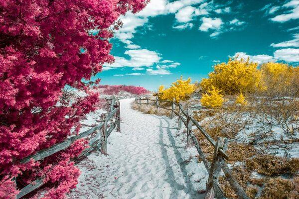 Snímek Island Beach od fotografa Davida Nilsena, zvýrazněný v kategorii Infrared Color v soutěži infračervených fotografií Život v jiném světle - Sputnik Česká republika