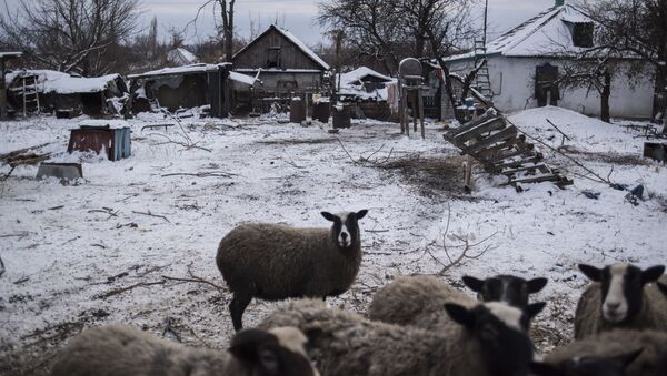 Ovce ve vesnici Doněckij v Luhanské oblasti - Sputnik Česká republika