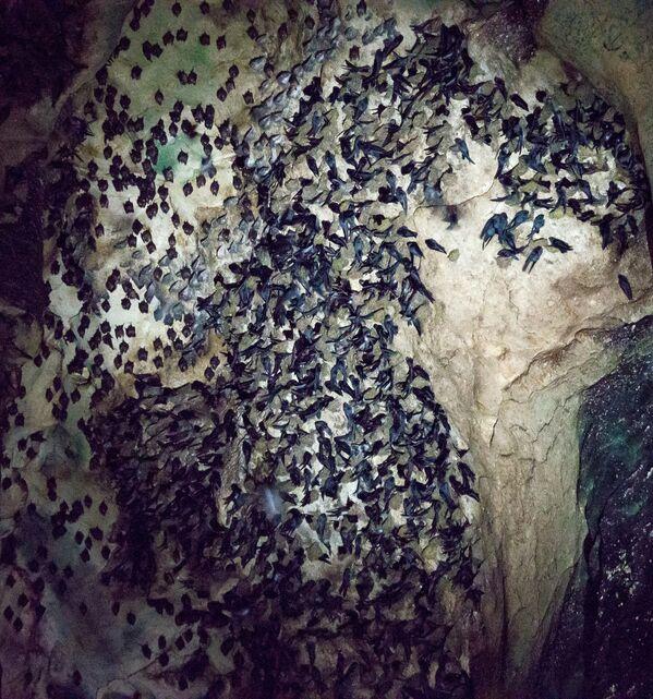 Netopýři v jeskyni Gomantong v Malajsii - Sputnik Česká republika