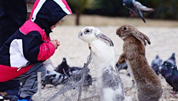 Dítě se dívá na králíky - Sputnik Česká republika