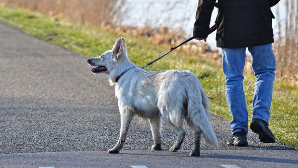 Pes se svým pánem - Sputnik Česká republika