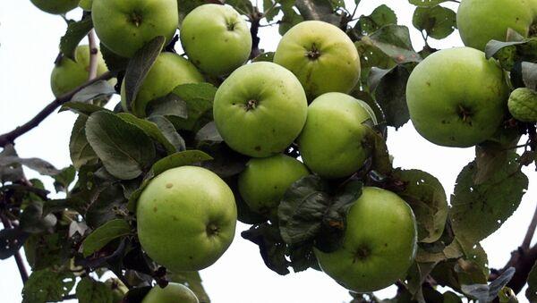 Jablka - Sputnik Česká republika
