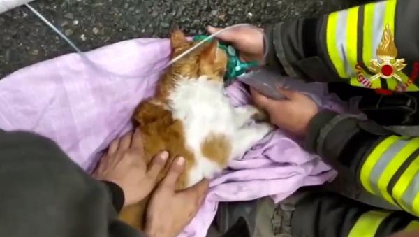 Zázračná záchrana dvou koček po intoxikaci pomocí kyslíkové masky (VIDEO) - Sputnik Česká republika