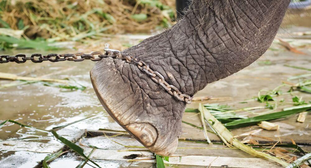 Nevinné zvíře zemřelo kvůli  nedbalosti úřadů. Krutá smrt slona byla natočena