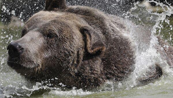 Medvěd syrský v americkém Orphaned Wildlife Center v Otisville. Ilustrační foto - Sputnik Česká republika