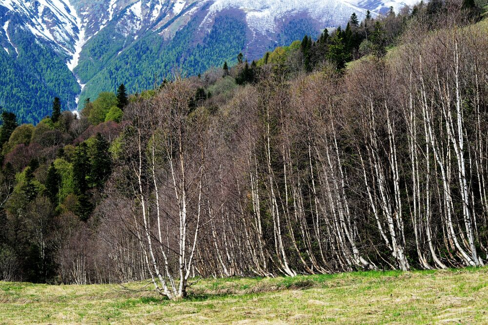Pohled na hory a lesy Kavkazské chráněné krajinné oblasti.
