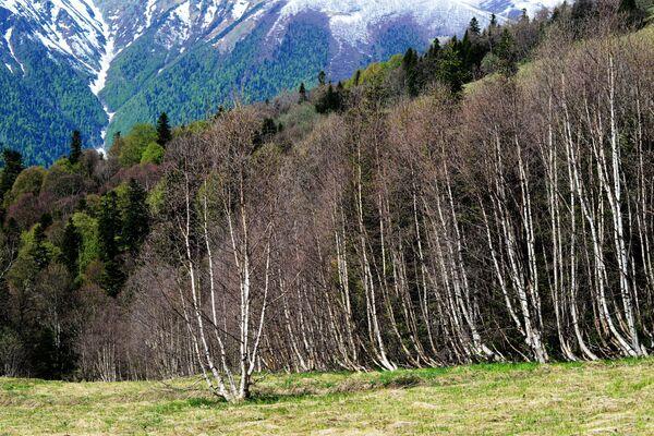 Pohled na hory a lesy Kavkazské chráněné krajinné oblasti. - Sputnik Česká republika