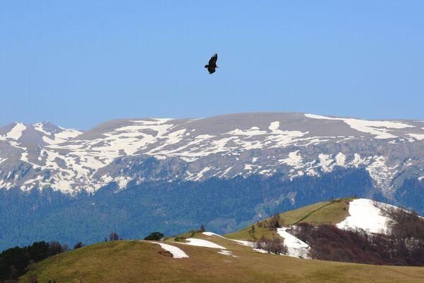 Orel letící nad horami Kavkazské chráněné krajinné oblasti. - Sputnik Česká republika