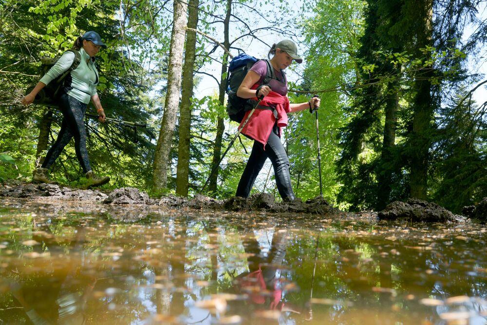 Turistky procházejí lesem severní oblasti Kavkazské přírodní biosférické rezervace Ch. G. Šapošnikova.