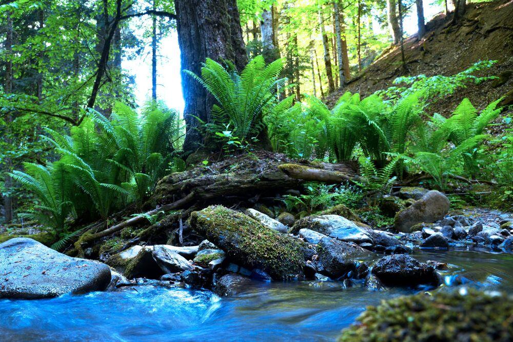 Horní potok v lesu severní oblasti Kavkazské přírodní biosférické rezervace Ch. G. Šapošnikova.